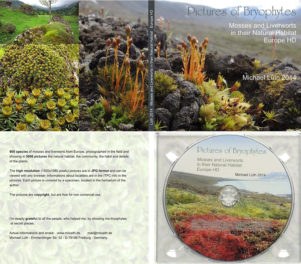 bryophyte pictures michael lueth mosses liverworths